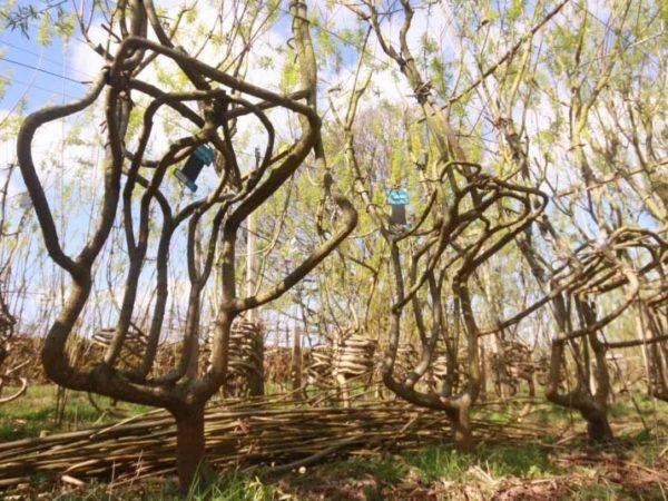 chairs from trees
