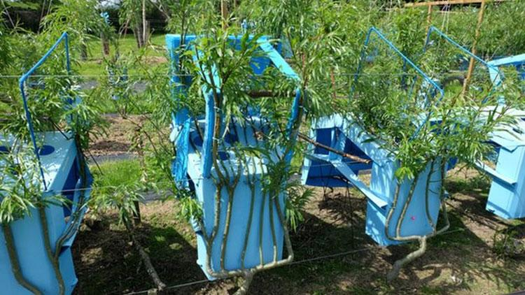 chairs from trees frames