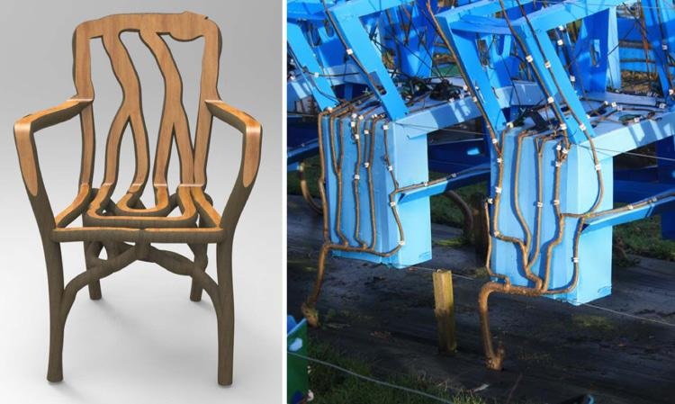 chairs from trees process